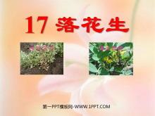 《落花生》PPT课件tt娱乐官网平台3