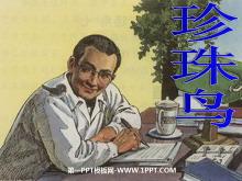 《珍珠鸟》PPT课件tt娱乐官网平台3