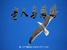 《老人与海鸥》PPT课件下载2