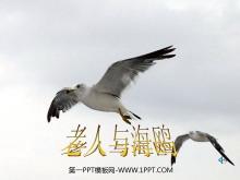 《老人与海鸥》PPT课件下载3