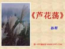 《芦花荡》PPT课件2