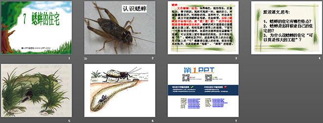 《蟋蟀的住宅》ppt教学课件下载
