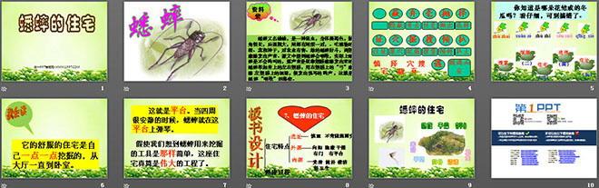 《蟋蟀的住宅》ppt教学课件下载3