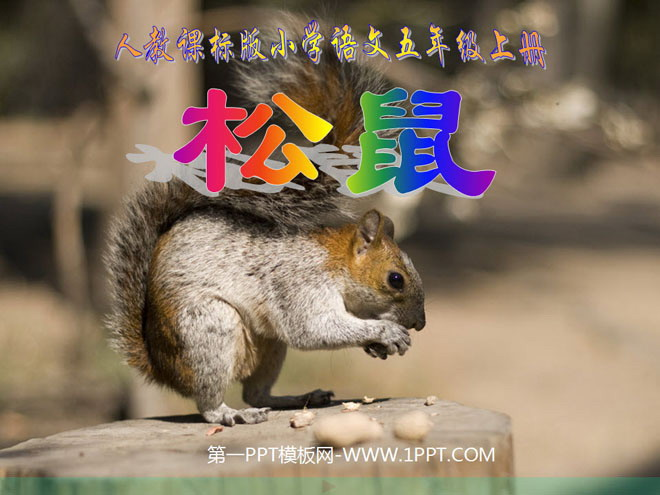 《松鼠》ppt课件下载2
