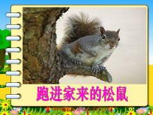 《跑进家来的松鼠》PPT课件下载