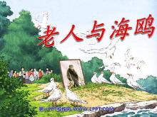 《老人与海鸥》PPT课件下载4