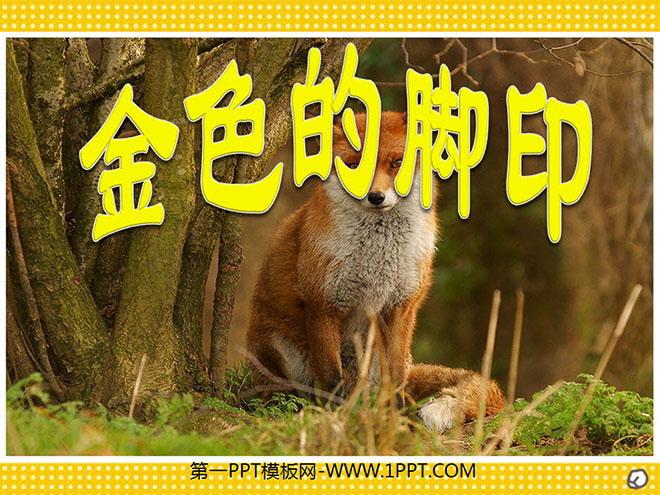 《金色的脚印》PPT课件下载2 阅读课文《金色的脚印》 小狐狸孤零零地坐在窝里,仰起脖子嚎叫着。那是一种清脆的、悲伤的声音。 正太郎目不转睛地看着小狐狸,他想:小狐狸也许在叫:妈妈——妈妈——这小狐狸多可怜呀。 ... ... ... 过了一个月,老狐狸和正太郎熟悉了,小狐狸一见正太郎,也会用它那粗糙的粉红色的舌头柔和地舔他的手。有时家里没有别人,正太郎的屋门就会轻轻地响一声,那两只狐狸从稍稍拉开地门缝进来,舔正太郎的手,轻松自在地在屋里踱来踱去。 路上,