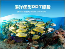 美丽的海底世界鱼群鱼类PPT模板