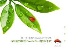 清新绿叶露珠七星瓢虫背景PPT模板
