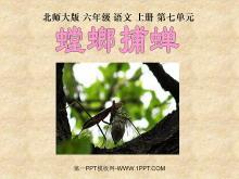 《螳螂捕蝉》PPT课件2