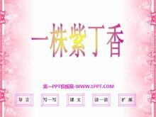 《一株紫丁香》PPT课件