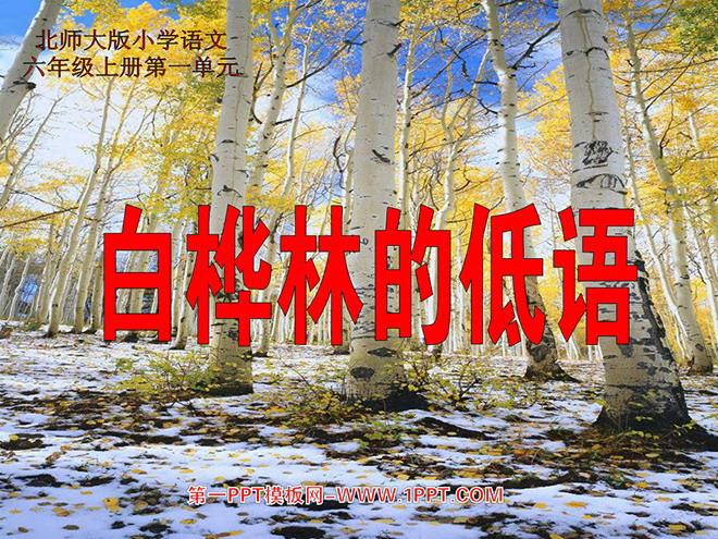 《白桦林的低语》ppt课件2