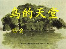 《鸟的天堂》PPT教学课件下载5
