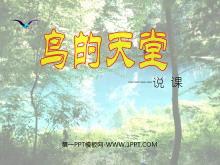 《鸟的天堂》PPT教学课件下载6