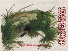 《蟋蟀的住宅》ppt教学课件下载5
