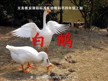 《白鹅》PPT课件下载5