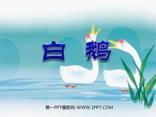 《白鹅》PPT课件下载6