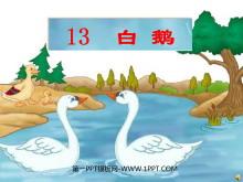 《白鹅》PPT课件下载7