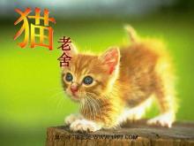 《猫》PPT课件tt娱乐官网平台5