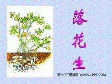 《落花生》PPT课件下载6