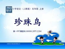 《珍珠鸟》PPT课件下载5