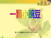 《一颗小豌豆》PPT课件2