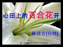 《心田上的百合花》PPT�n件2