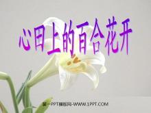《心田上的百合花》PPT�n件3