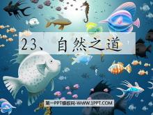 《自然之道》PPT课件2