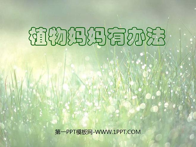 《单元教学有妈妈》PPT年级课件下载4二语文下册办法第一单元植物备课图片
