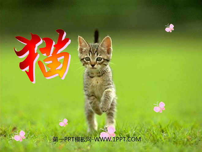 《猫》PPT课件下载4