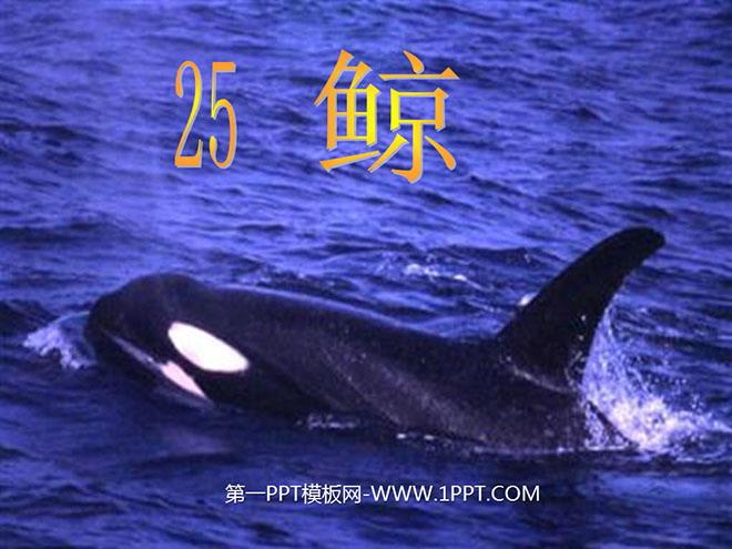 ppt背影图片素材鲸鱼