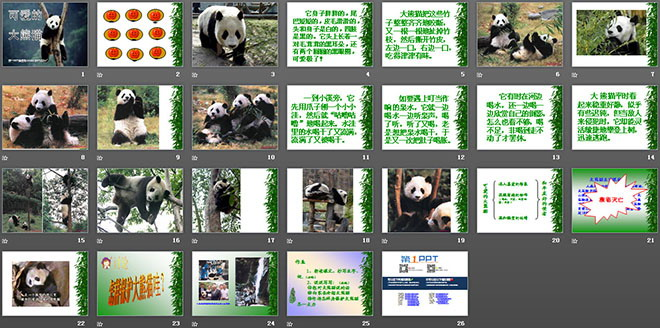 《可爱的大熊猫》PPT课件