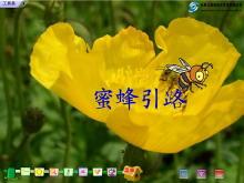 《蜜蜂引路》Flash动画课件