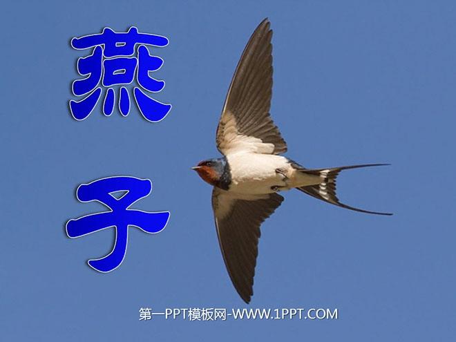 《燕子》PPT课件 学习生字 俊 俏 拢 添 沾 倦 谱 符 学习词语 俊俏 聚拢 增添 五线谱 音符 翅膀 吹拂 掠过 偶尔 波纹 荡漾 ... ... ... 比较一下,说说哪句写得好,好在哪里? 一身羽毛,一对翅膀,加上尾巴,凑成了小燕子。 一身乌黑光亮的羽毛,一对俊俏轻快的翅膀,加上剪刀似的尾巴,凑成了活泼可爱的小燕子。 才下过几阵雨,风吹拂着柳丝,草、叶、花聚拢来,形成了春天。 才下过几阵蒙蒙的细雨。微风吹拂着千万条才展开带黄色的嫩叶的柳丝。青的草,绿的叶,各色鲜艳的花,都像赶集似的聚拢来,形