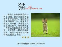 《猫》PPT课件2