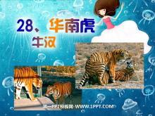 《华南虎》PPT课件2