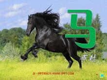 《马》PPT课件
