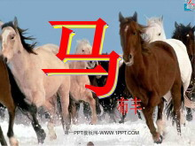 《马》PPT课件2