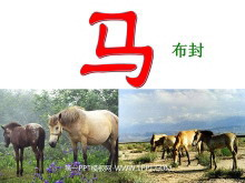 《马》PPT课件4