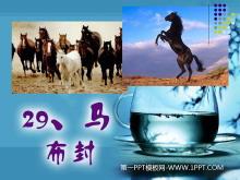 《马》PPT课件5