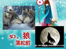 《狼》PPT课件5
