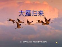 《大雁归来》PPT课件