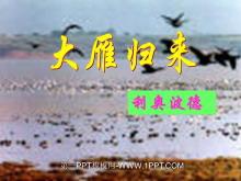 《大雁归来》PPT课件2