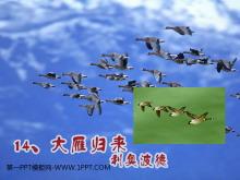 《大雁归来》PPT课件3