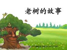 《老树的故事》PPT课件3