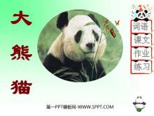 《大熊猫》PPT课件3