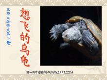 《想飞的乌龟》PPT课件3
