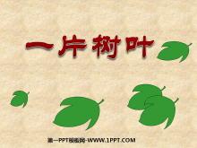《一片树叶》PPT课件
