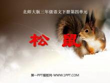 《松鼠》PPT课件2